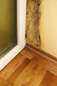 DIY Mold Remediation